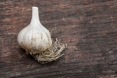 Organic garlic Royalty Free Stock Photo