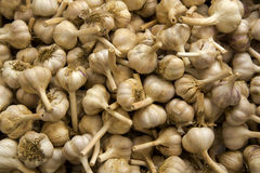 Organic Garlics Royalty Free Stock Photos