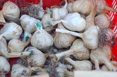 Organic garlics Stock Photos