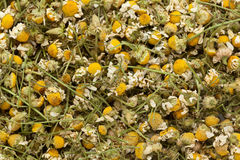 Organic German chamomile (Matricaria chamomilla) flowers. Macro close up background texture. Top view stock images