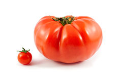 Organic Giant Beef and Cherry Tomatoes Isolated Royalty Free Stock Photo
