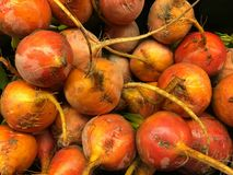 Organic Gold beets on Black Stock Photo