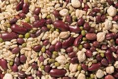 Organic 8 grain-beans dessert. Organic Adzuki, Organic Red Kidney Beans, Organic Chickpeas, Organic Brown Rice, Organic Raw Oat Groat, Organic Millet, Organic Stock Image