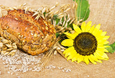 Organic grain bread with sunflower Stock Photography