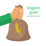 Organic grain concept. Male farmer holding a wheat bag in hands. Good grain harvest. Agriculture, harvesting. Vector illustration flat design. Isolated on Stock Images