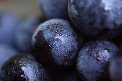 Organic grapes. Blue grapes in the garden, shallow focus Stock Image