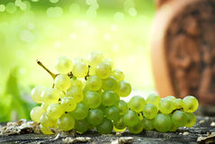 Organic grapes Stock Images
