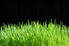 Organic grass Stock Photos