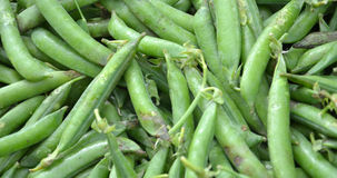 Organic green beans Royalty Free Stock Image