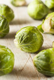 Organic Green Brussel Sprouts Royalty Free Stock Image
