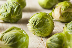 Organic Green Brussel Sprouts. Ready to Cook Royalty Free Stock Photo