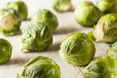 Organic Green Brussel Sprouts. Ready to Cook Stock Image