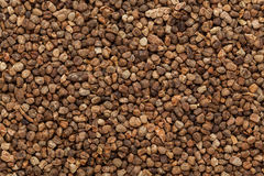 Organic green cardamom (Elettaria cardamomum) Seeds. Stock Image