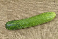 Organic green cucumber Royalty Free Stock Image