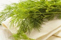 Free Organic Green Dill Herb Stock Photos - 41461693
