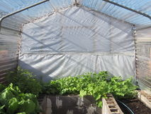 Organic Green House. This is a picture of my organic greenhouse Stock Photos