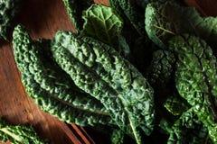 Organic Green Lacinato Kale Stock Photos