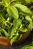 Organic Green Mint Leaf Stock Images