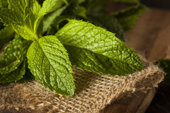 Organic Green Mint Leaf Royalty Free Stock Image