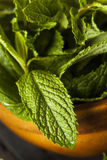 Organic Green Mint Leaf Royalty Free Stock Photography