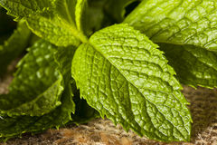 Organic Green Mint Leaf Stock Photos