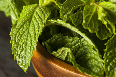 Organic Green Mint Leaf Royalty Free Stock Images