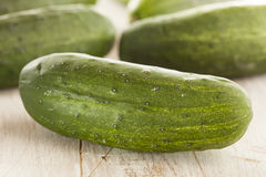 Organic Green Pickle Cucumbers Stock Images