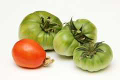 Organic, green and red tomato on white background. Royalty Free Stock Images