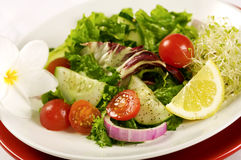 Organic Green Salad. Green Salad with Vegetables and lemon slice, vertical, shallow depth of field Royalty Free Stock Photos