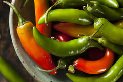 Organic Green Spicy Serrano Peppers Royalty Free Stock Image