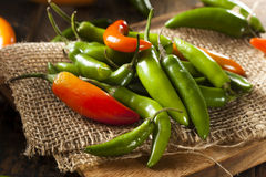 Organic Green Spicy Serrano Peppers Stock Images