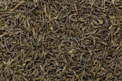Organic Green Tea (Camellia sinensis) dried long leaves. Royalty Free Stock Photos