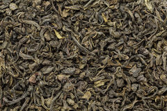 Organic Green Tea (Camellia sinensis) dried whole leaves. Stock Image