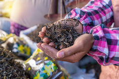Organic green tea dry process after picked on hand in market Stock Images