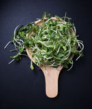 Organic green young sunflower sprouts Stock Photo