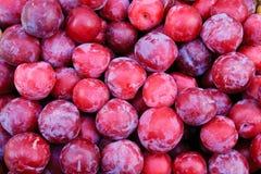 Organic greengage plums Stock Photo