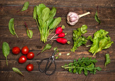 Organic greens herbs radishes cherry tomatoes garlic just from t. He garden on rustic wooden background. Fresh ingredients for salad Stock Images