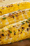 Organic Grilled Corn on the Cob Stock Image
