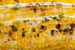 Organic Grilled Corn on the Cob Royalty Free Stock Image
