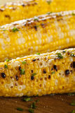 Organic Grilled Corn on the Cob Royalty Free Stock Images