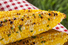 Organic Grilled Corn on the Cob Royalty Free Stock Photography