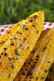 Organic Grilled Corn on the Cob Royalty Free Stock Photo