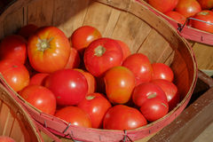 Organic grown cherry tomatoes in a large peach basket at a local Stock Photo