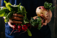 Organic harvested vegetables. Farmer`s hands holding fresh vegetables, closeup.  Stock Photo