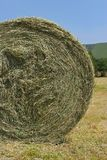 Organic Hay Bale Royalty Free Stock Photo