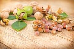 Organic hazelnut and walnut Royalty Free Stock Photo