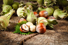 Organic hazelnut Royalty Free Stock Photos