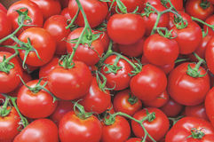 Organic healthy fresh big red ripe tomatoes on the market on sun. Ny day close Royalty Free Stock Image