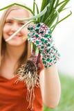 Organic, Healthy Green Onions Royalty Free Stock Photos