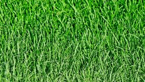 Organic healthy lawn without the use of pesticides Royalty Free Stock Photos